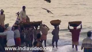 Catch coming ashore at Nattika