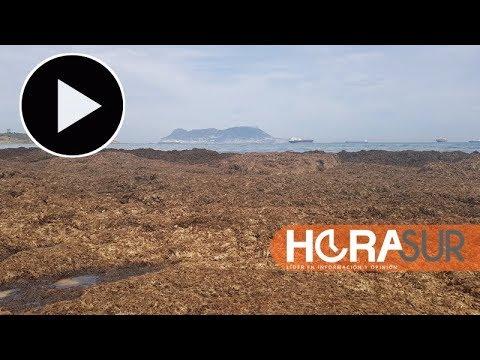 Braunalgen an Spaniens Südküste