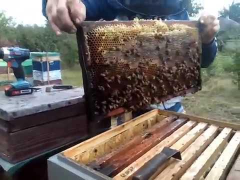 Что с мёдом? Поездка на пасеку 6 июля 2019