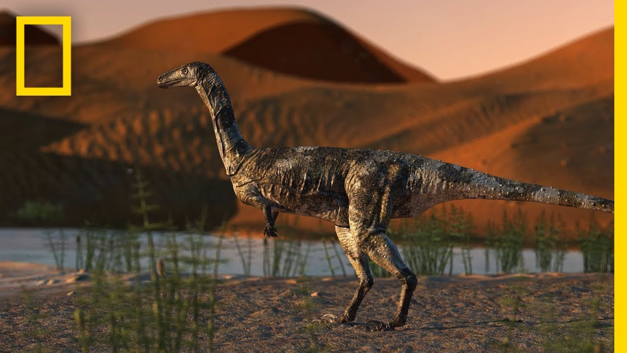Dinosaur Foot is Best-Preserved Theropod Fossil in Brazil | National Geographic thumbnail