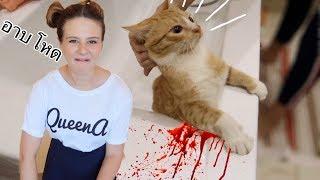 อาบน้ำให้แมวรัสเซียครั้งแรก !!