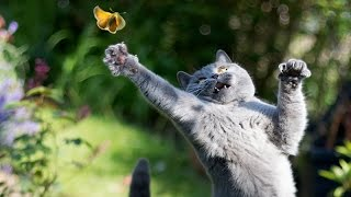 Only Funny Animals Can Make You Laugh So Hard You Cry  Funny Animal Compilation