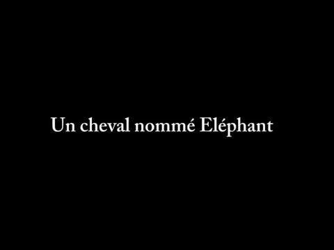 Un cheval nommé éléphant - Bande annonce HD VOST