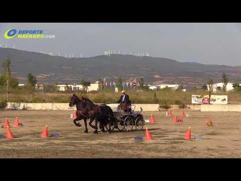 Campeonato navarro de enganches Olite 2017 7