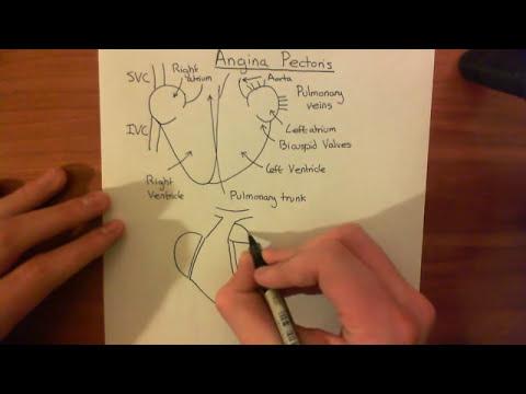 Hypertonie Videovortrag