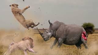 животные, 10 СУМАСШЕДШИХ БИТВ ЖИВОТНЫХ СНЯТЫХ НА КАМЕРУ