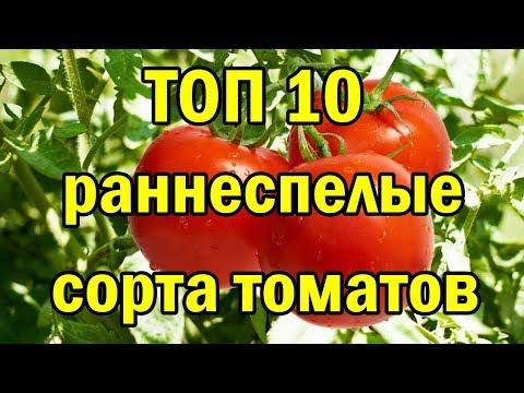 ТОП 10 раннеспелые сорта ТОМАТОВ.
