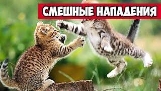Смешные нападения животных, котов, собак и других | Bazuzu Video ТОП подборка май 2017