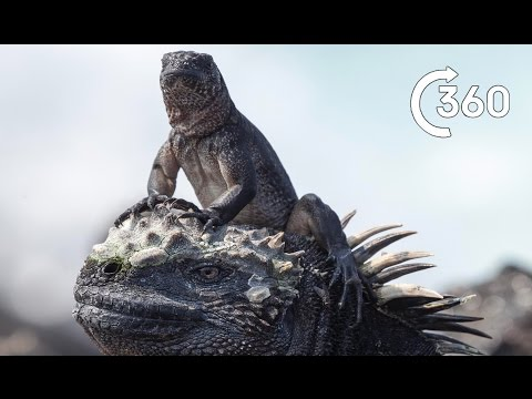 Planet Earth II - Galapagos Islands Filming Iguana vs Snakes 360°