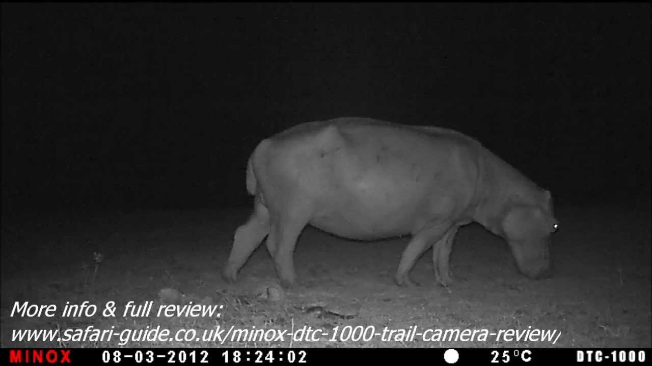 Видео о товаре Фотоловушка (лесная камера) MINOX DTC 1000