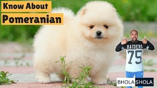 Pomeranian Dog Breed Price In India Free Online Videos Best Movies