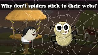 Why don't spiders stick to their webs? | #aumsum #kids #science #education #children