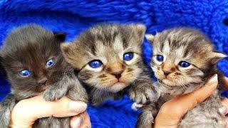 Маленькие котята остались одни! Спасение котят! Брошенные котята находят свой дом! Наши кошки и коты