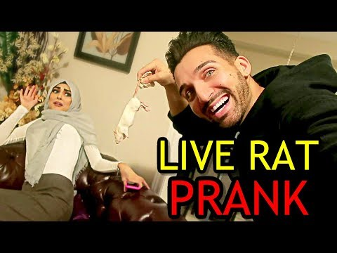 LIVE RAT PRANK (Epic Reation!!)