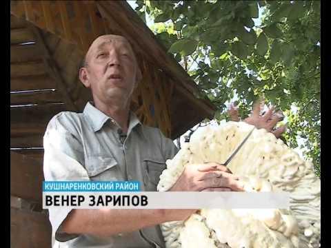 Настоящий парк аттракционов построил житель Кушнаренково прямо у себя на огороде