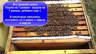 Пчеловодство 2018 - Нежданчик