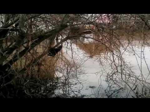 Дачу затопило / Весенний паводок