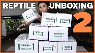 Unboxing More Reptiles! 9 New Injured and Rehomed Animals