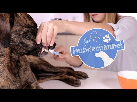 Hundezahnpasta selbst gemacht DIY ***Julias Hundechannel***