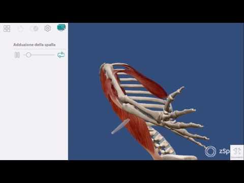 La sindrome della colonna vertebrale cervicale post-traumatico