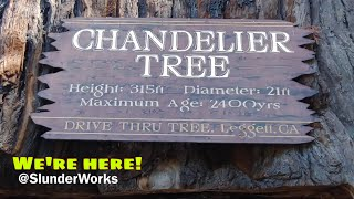 Driving to the World Famous drive Thru Redwood Tree The Chandelier Tree in Drive Thru Tree Park