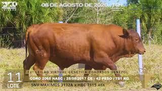 Coro 2068 b4 fiv