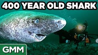 Oldest Animals In The World (GAME)
