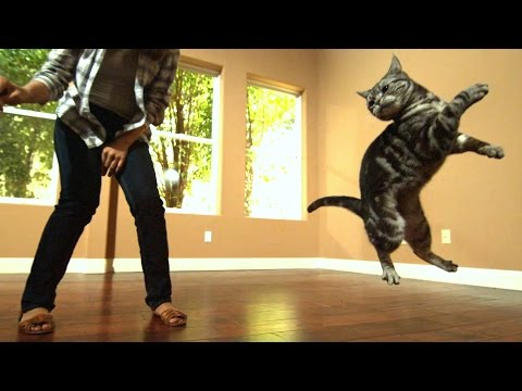 Awesome Cats In Slow Motion (1,500fps)