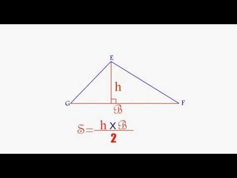 مساحة مثلث على أنواعه الرياضيات المستوى الخامس إبتدائي