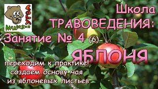 Школа ТРАВОВЕДЕНИЯ: Занятие № 4(6) ЯБЛОНЯ - переходим к практике! Ферментируем разными способами!
