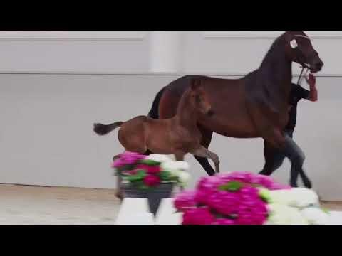 Video Vorschau von Morricone