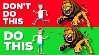 Do This If You Are Attacked By a Lion