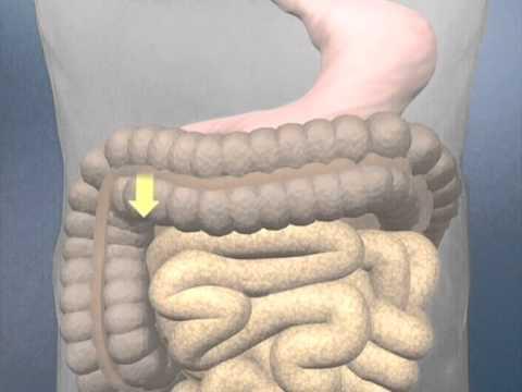 Zell-Vitalstoffe – Lehrvideo der Dr. Rath Gesundheits-Allianz