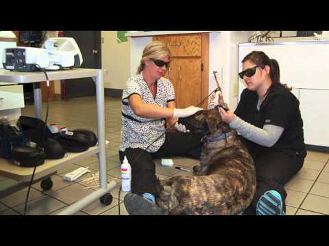2014 Sierra Vet Clinic Year in Review Video