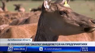 Выпуск новостей 20:00 от 10.08.2018