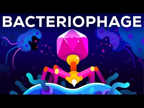 Are Bacteriophage's the Deadliest Organisms on Earth?