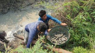 สูบน้ำจับปลา ได้ปลาหลายคัก  สุดทึ่ง! ปลาซัคเกอร์อย่างเยอะ ปิ้งปลาเข็ง(หมอ)แซบหลาย