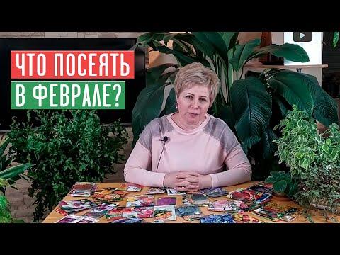 СЕЗОН 2020: ЧТО ПОСЕЯТЬ В ФЕВРАЛЕ: цветы, овощи, ягоды УСЛОВИЯ РОЗЫГРЫША / Садовый гид