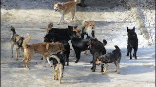 Смотреть онлайн Проверка действия ультразвука на собак