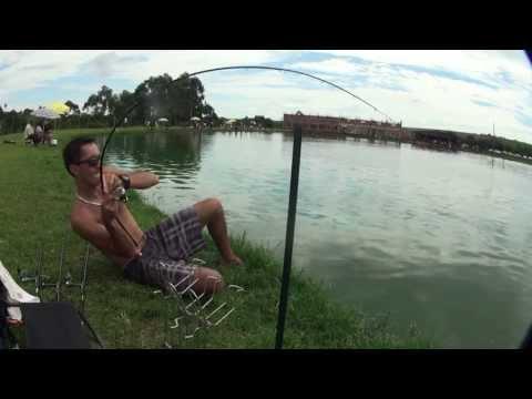 Tambaquis e Tambacus gigantes no Ultralight linha 0,22mm mono - Jeanamental pescaria