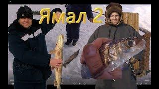 Рыбалка в салехарде добирались на самодельном вездеходе