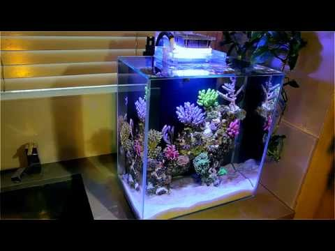Fluval Edge 12g Nano Reef
