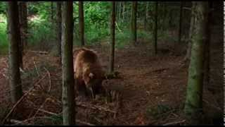 Bear vs. BEES - Nature's Secret Power