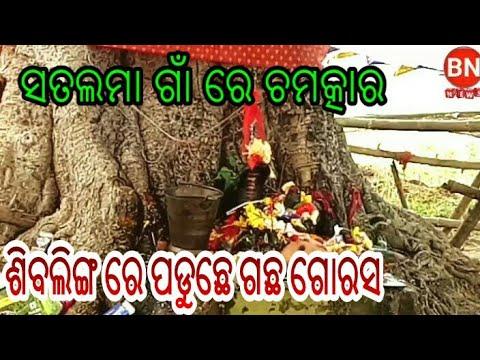 BN NEWS= ସତଲମା ରେ ଚମତ୍କାର ଶିବଲିଙ୍ଗ ରେ ପଡୁଛେ ଗଛୁ ଗୋରସ sambalpuri news