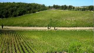 preview picture of video 'Wine Tour in Tuscany: View of the vineyards at Caiarossa in Maremma'