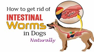 How to Get Rid of Worms in Dogs || Home Remedies for Dogs Worms