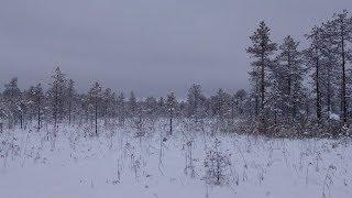 Архангельская область зима 2019