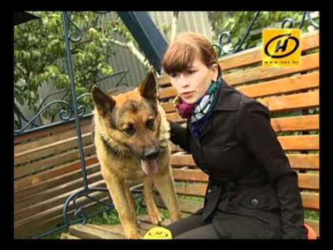 «Канистерапия» -- лечение с помощью собак