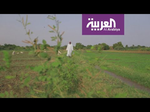 العرب اليوم - سفينة المساعدات السعودية - الإماراتية إلى السودان شكَّلت انفراجة على الموسم الزراعي