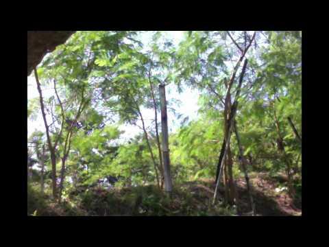 Giardia at matagal na ubo